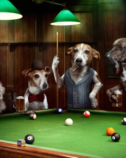 poolroom.dogs_rhea_r3_crop
